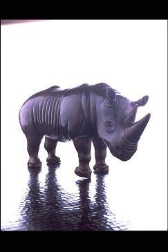 s_repousse_rhinoceros.jpg