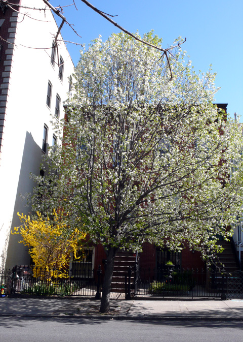 spring9.jpg