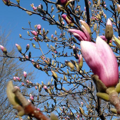 spring09_3