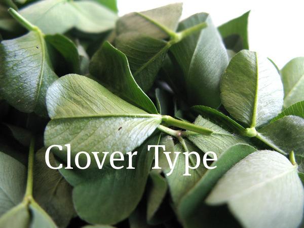 clovertype3