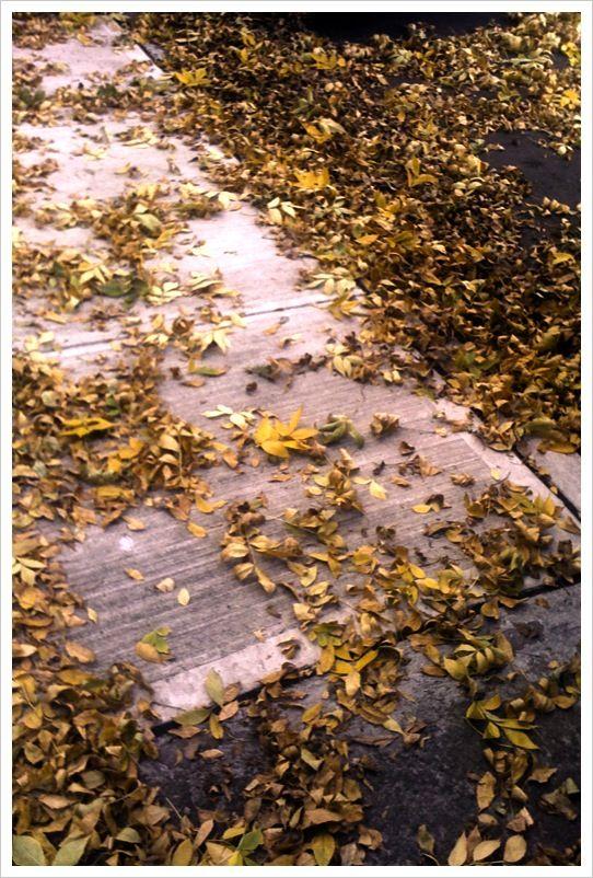 autumnyellow2