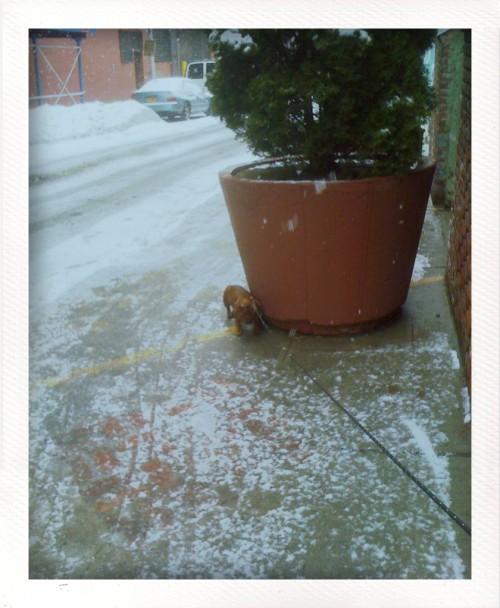 snow maia